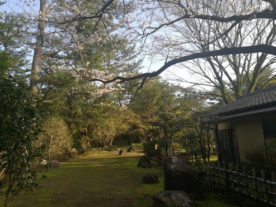 japanese tea garden miyazaki aoshima