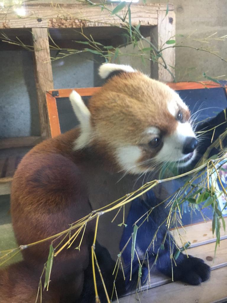 zoo miyazaki cute animal